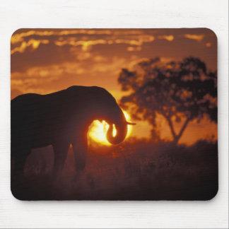 Botswana, Chobe National Park, Bull Elephant Mouse Pad