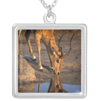 Botswana, Chobe National Park, Bull Impala Square Pendant Necklace