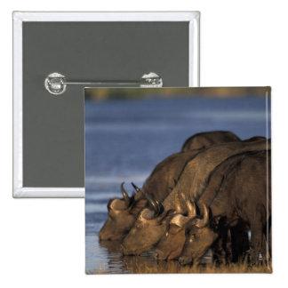 Botswana Chobe National Park Cape Buffalo Button