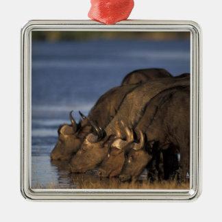 Botswana, Chobe National Park, Cape Buffalo Metal Ornament