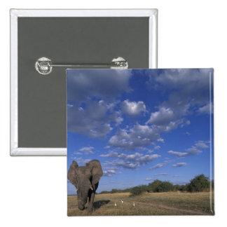 Botswana, Chobe National Park, Charging Elephant Button