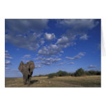 Botswana, Chobe National Park, Charging Elephant Cards