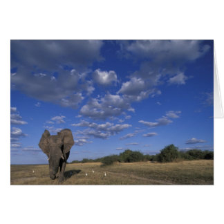 Botswana, Chobe National Park, Charging Elephant Card