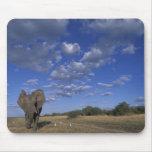 Botswana, Chobe National Park, Charging Elephant Mouse Pad