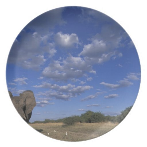 Botswana, Chobe National Park, Charging Elephant Party Plates