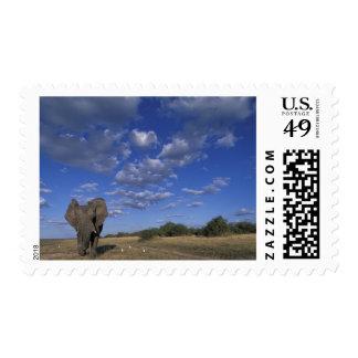 Botswana, Chobe National Park, Charging Elephant Postage