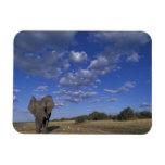 Botswana, Chobe National Park, Charging Elephant Rectangular Photo Magnet