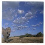Botswana, Chobe National Park, Charging Elephant Ceramic Tile