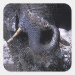 Botswana, Chobe National Park, Elephant 2 Square Sticker