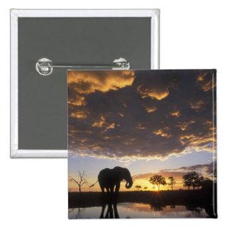 Botswana Chobe National Park Elephant Buttons