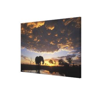 Botswana, Chobe National Park, Elephant Canvas Print