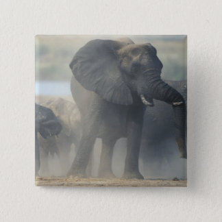 Botswana, Chobe National Park, Elephant herd 2 Button