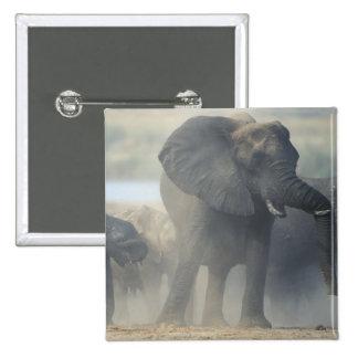 Botswana Chobe National Park Elephant herd 2 Pinback Button