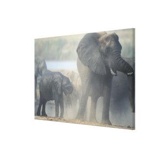 Botswana, Chobe National Park, Elephant herd 2 Canvas Print