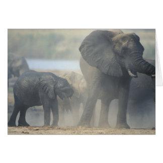 Botswana, Chobe National Park, Elephant herd 2 Card