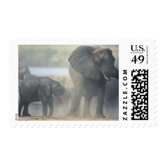 Botswana, Chobe National Park, Elephant herd 2 Postage Stamp