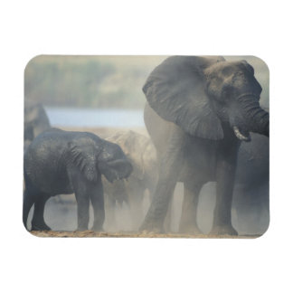Botswana, Chobe National Park, Elephant herd 2 Rectangular Photo Magnet