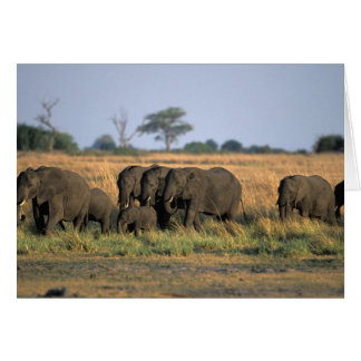 Botswana, Chobe National Park, Elephant herd Card