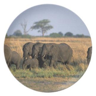 Botswana, Chobe National Park, Elephant herd Melamine Plate