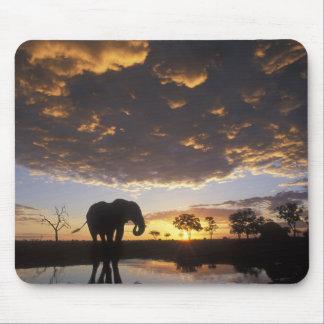 Botswana, Chobe National Park, Elephant Mouse Pad