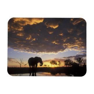 Botswana, Chobe National Park, Elephant Rectangular Photo Magnet