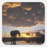 Botswana, Chobe National Park, Elephant Stickers