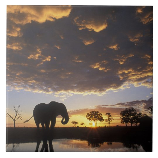 Botswana, Chobe National Park, Elephant Tile