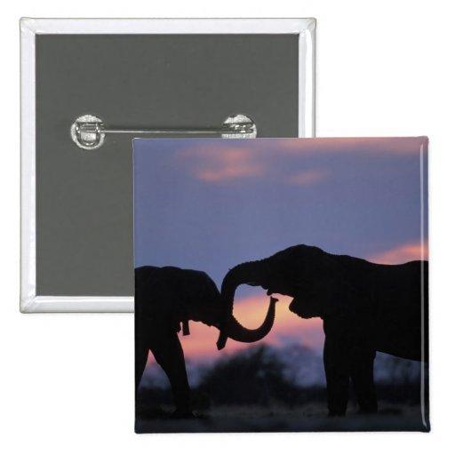 Botswana, Chobe National Park, Elephants Buttons