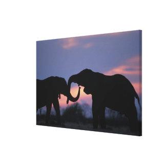 Botswana, Chobe National Park, Elephants Canvas Print