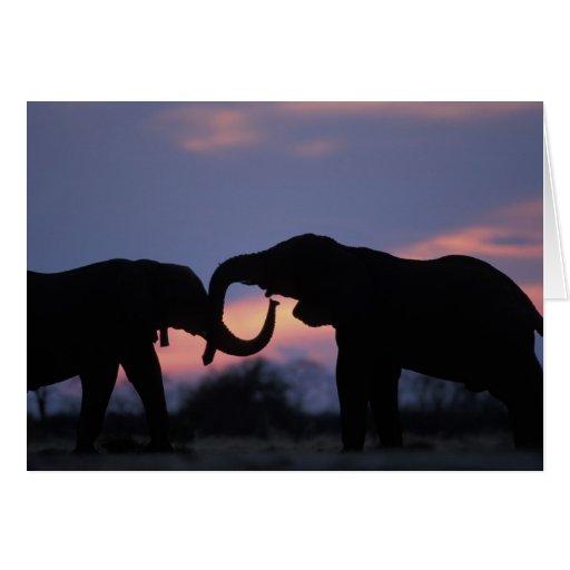 Botswana, Chobe National Park, Elephants Card