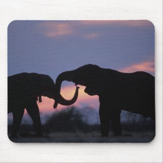 Botswana, Chobe National Park, Elephants Mouse Pad