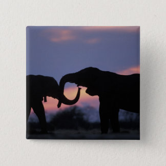 Botswana, Chobe National Park, Elephants Pinback Button