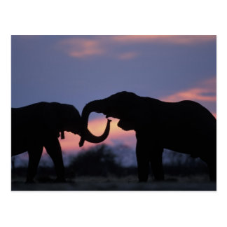 Botswana, Chobe National Park, Elephants Postcard