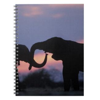 Botswana, Chobe National Park, Elephants Spiral Notebook