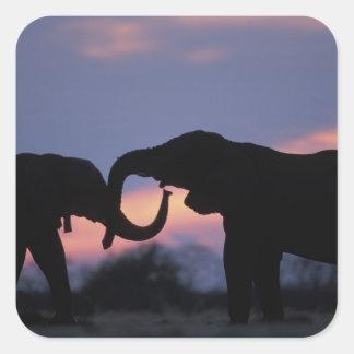 Botswana, Chobe National Park, Elephants Square Sticker