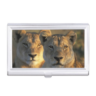 Botswana, Chobe National Park, Lionesses Business Card Case