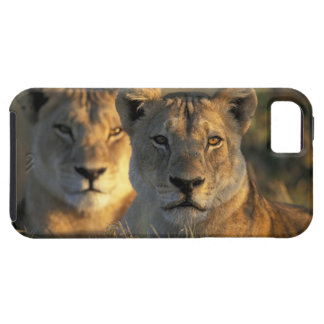 Botswana, Chobe National Park, Lionesses iPhone 5 Cover