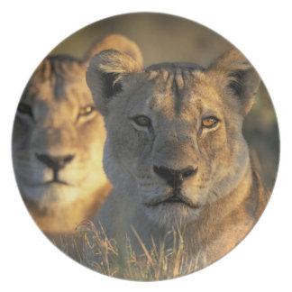 Botswana, Chobe National Park, Lionesses Melamine Plate