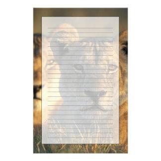 Botswana, Chobe National Park, Lionesses Stationery