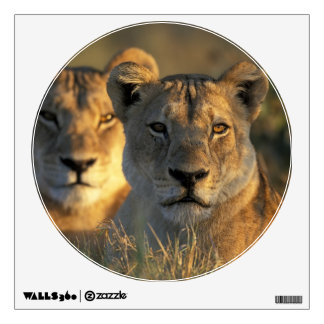 Botswana, Chobe National Park, Lionesses Wall Stickers