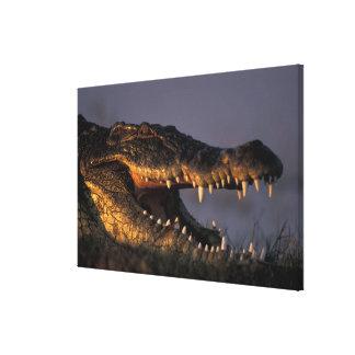 Botswana, Chobe National Park, Nile Crocodile Canvas Print