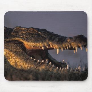 Botswana, Chobe National Park, Nile Crocodile Mouse Pad