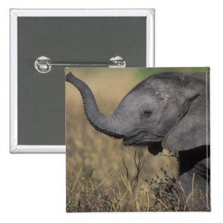 Botswana Chobe National Park Young Elephant Pinback Button