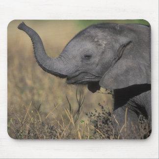 Botswana, Chobe National Park, Young Elephant Mouse Pad