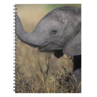 Botswana, Chobe National Park, Young Elephant Notebook