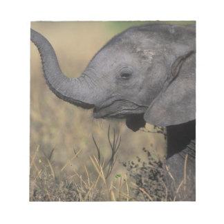 Botswana, Chobe National Park, Young Elephant Notepad
