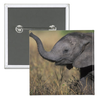 Botswana, Chobe National Park, Young Elephant Pinback Button