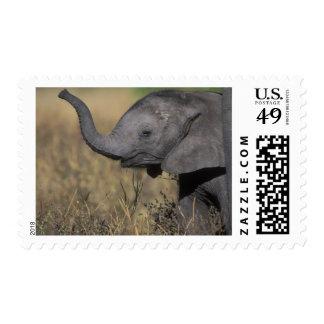 Botswana, Chobe National Park, Young Elephant Postage