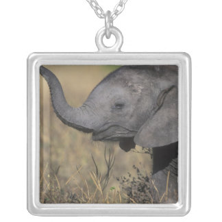 Botswana, Chobe National Park, Young Elephant Silver Plated Necklace