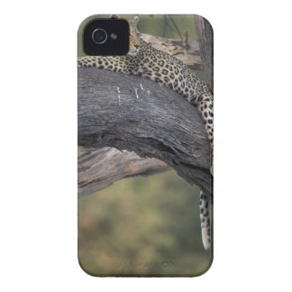 Botswana, Moremi Game Reserve, Adult Female 2 Case-Mate iPhone 4 Cases